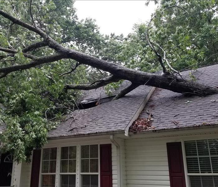 A tree through your roof can be devastating!