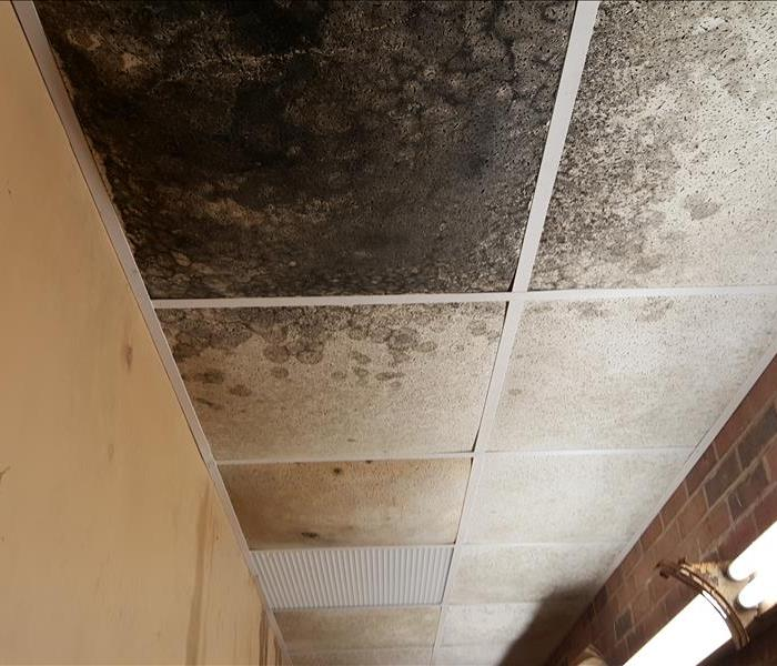 Mold Remediation Youngsville, NC: Does your home or business have a mold issue?